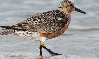 Tierra del Fuego: El viernes 05 de octubre comienza el festival de aves en Río Grande