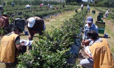 UATRE anunció un aumento salarial del 32% para trabajadores rurales permanentes