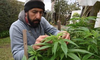 Uruguay: La marihuana legal golpea fuerte al narcotráfico ya han perdido 22 millones de dólares