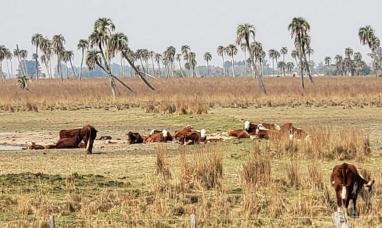 Uruguay: La mitad del país  está bajo emergencia agropecuaria declarada oficialmente