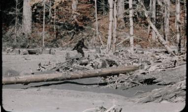 EE.UU.: Vuelve el bigfoot (Pié grande)