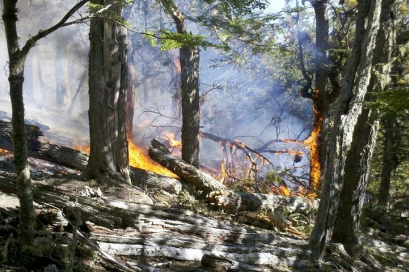 Tierra del Fuego: Cuatro hectáreas de bosque nativo afectados por el primer incendio de la temporada