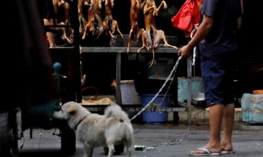China: Estofado de perro en el festival de carne canina