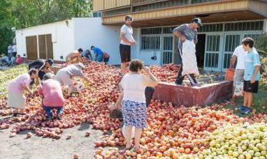 Productores tiraron 40 toneladas de fruta