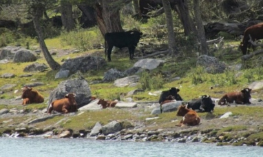 Santa Cruz: Recuperan la flora y fauna nativas en el parque nacional los glaciares