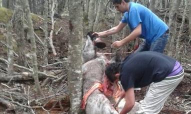 Tierra del Fuego: La causa por el caballo muerto a mazazos ya está en el tribunal de juicio en lo criminal de Ushuaia