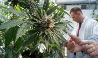 """Tierra del Fuego: """"Cuando hablamos de cannabis medicinal hablamos de salud"""""""