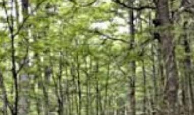Tierra del Fuego: Financiamiento para la restauración, conservación y manejo del bosque nativo