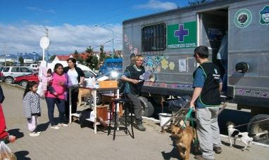 Tierra del Fuego: Funcionaria del municipio de Ushuaia dijo que van a hacer una castración masiva de perros