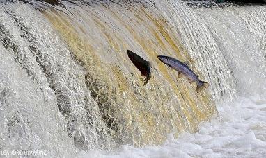 Tierra del Fuego: Impulsan el acondicionamiento del puente del río Valdés para el remonte de truchas en época de desove