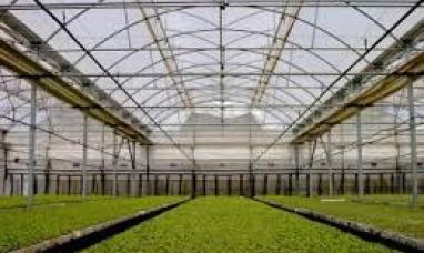 Tierra del Fuego: Invernaderos con desarrollo netamente fueguino son probados por el INTA