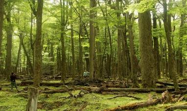 Tierra del Fuego: Lanzan nueva convocatoria para proyectos de restauración de bosques nativos