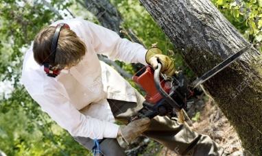 Tierra del Fuego: Murió trabajador del sector maderero golpeado por un árbol