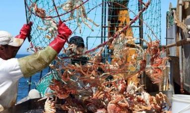 """Tierra del Fuego: """"La pesca llega al puerto y se va, es muy poco lo que acá queda"""""""