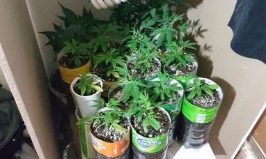 Tierra del Fuego: La policía investigaba elementos robados y se encontraron con una plantación de marihuana