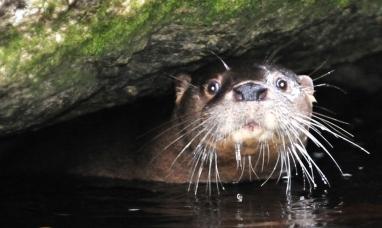 Tierra del Fuego: El proyecto huillín fue premiado por la sociedad argentina para el estudio de los mamíferos