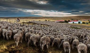 Tierra del Fuego: En setiembre se iniciará el censo nacional agropecuario