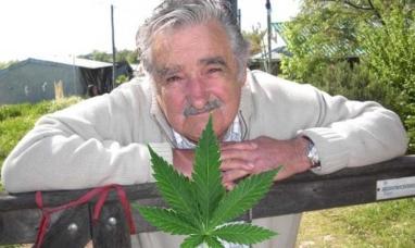 Uruguay: Empieza la venta de  marihuana estatal